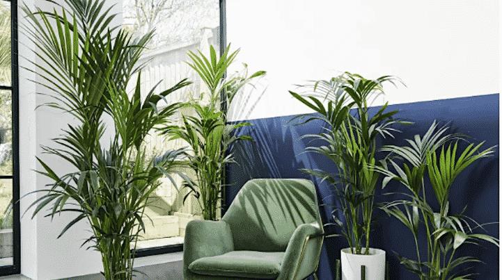 patch plants promo code